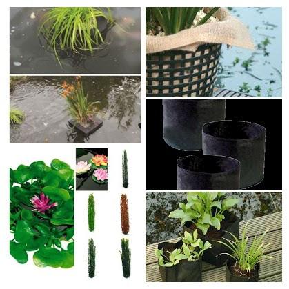 Pond Plants & Accessories