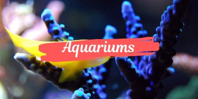 Aquariums Category