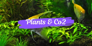 Plants and Co2 Category